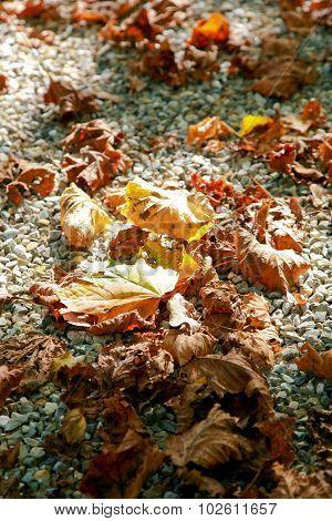 Autum Leaves On Pebble Stones