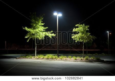 The shot has a spotlight feel applied to a parking lot partition with two trees and little shrubs. poster