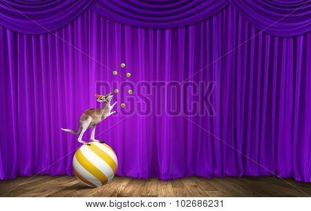 Circus kangaroo standing on ball and juggling with balls poster