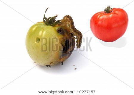 Fruit Vermin-creeping Caterpillar