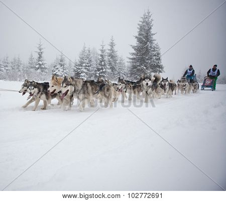 Belis, Romania - FEBRUARY 7: Unidentified competitor racing during