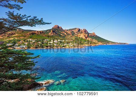 Esterel Rocks Beach Coast, Tree And Sea. Cannes Saint Raphael Cote Azur, Provence, France.