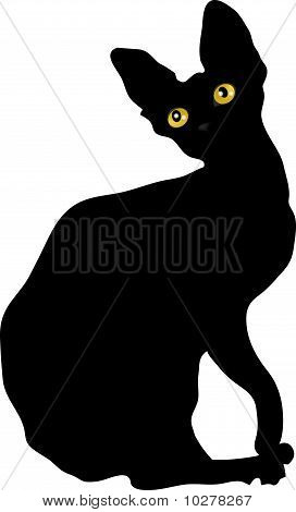 Silhouette of cat with yellow eyes