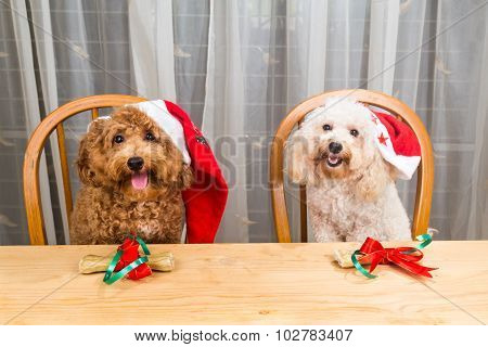 Concept Of Excited Dogs On Santa Hat With Christmas Gift On Table.