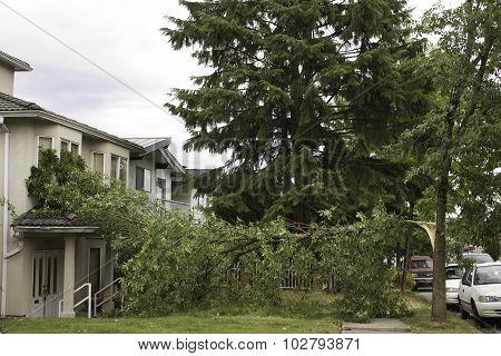 Wind splits tree, lands on balcony