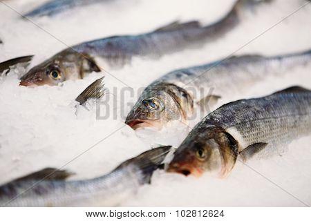 Fresh fish on ice on market store shop. Dorado fish on ice. Fish