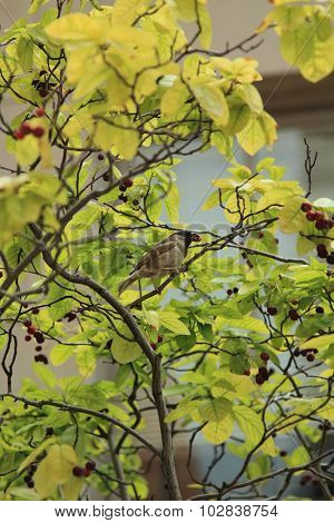 Bird Sitting On Branch Of Tree In Summer