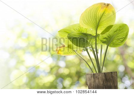 green leave on stump