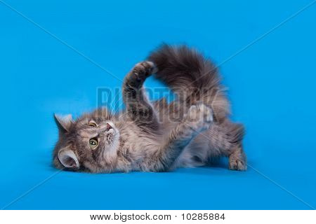 Cat Playing On Blue Background