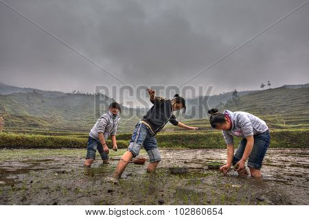 Chinese Schoolgirl Working On Flooded Farmers Field