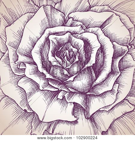 Rose close-up drawing, a design for wedding invitations cover, or different events