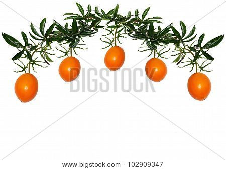 Arch Of Passionflower Vine And Fruit