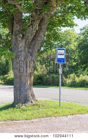 Busstop Sign Under Picturesque Maple Tree