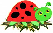 Here is a cute Ladybug taking a rest. poster