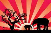 vector illustration of elephants in africa at sunset poster