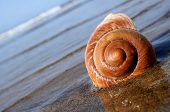 sea snail on the beach with blue background poster