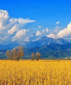 Tuscany, Italian Rural Landscape Near Pisa
