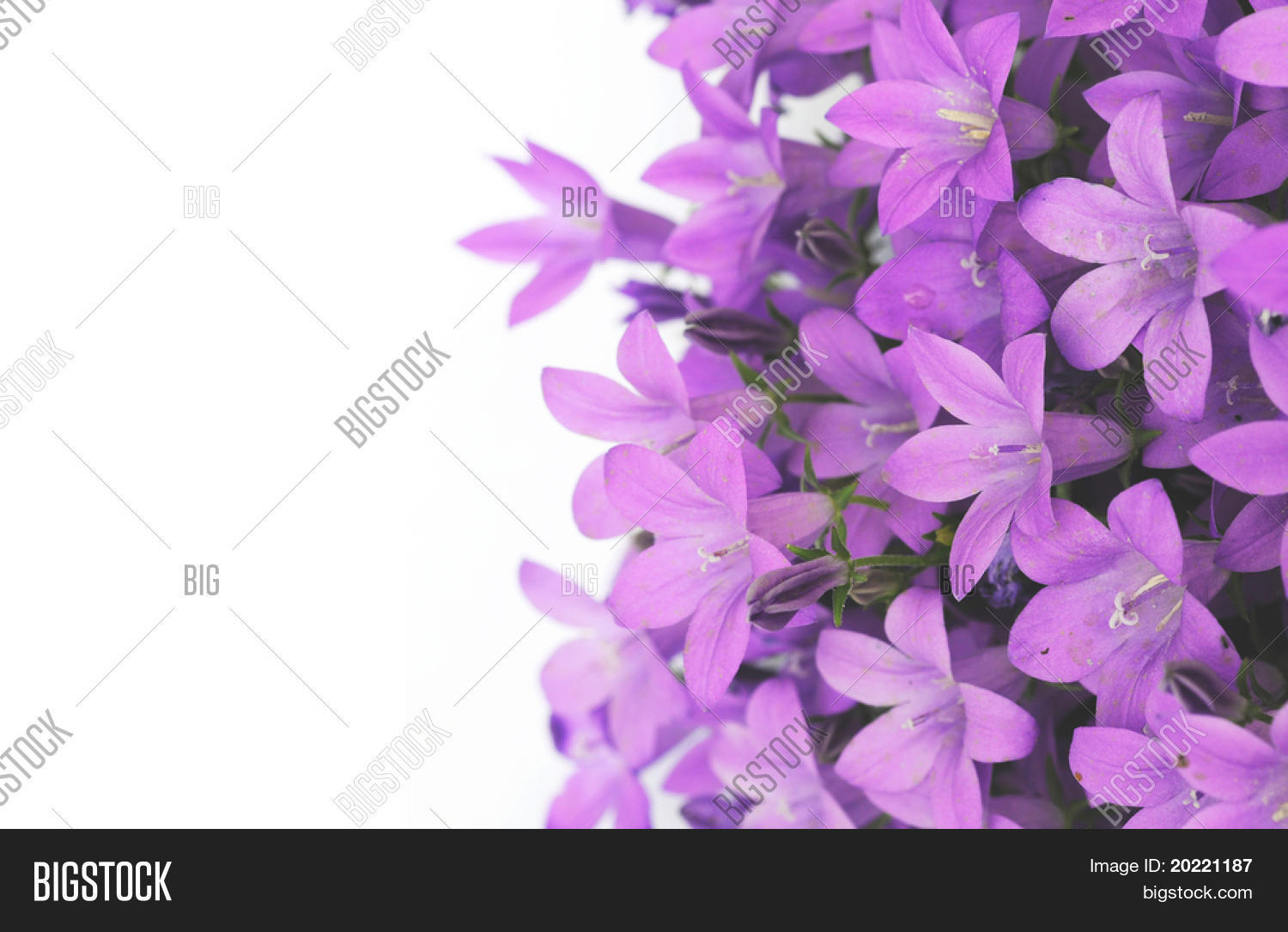 Lovely purple flowers against white image photo bigstock lovely purple flowers against white background mightylinksfo Images