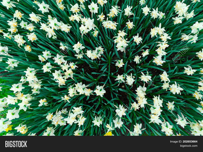 Beautiful Tulips Image Photo Free Trial Bigstock