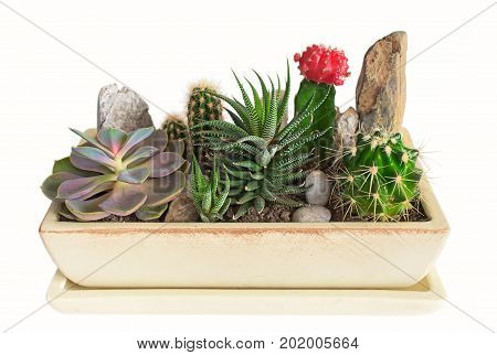 Succulent plant in pots. Indoor potted plants.