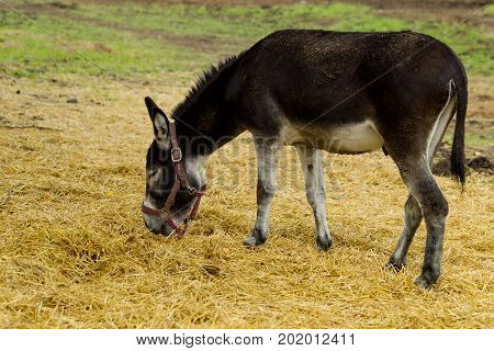 Donkey Grazes On A Summer Day