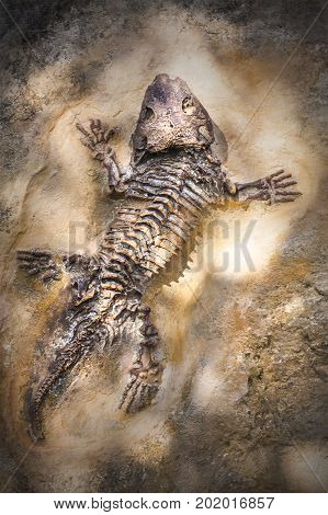 Extinct reptile skeleton in fossil stone. Science discovery in nature