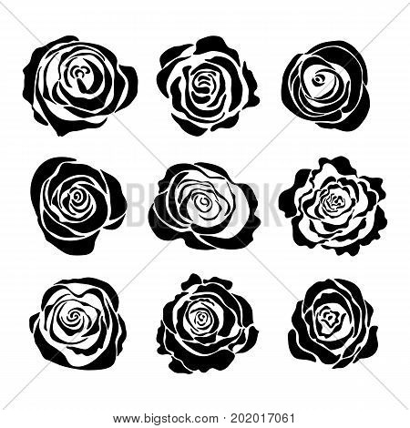 Vector template of roses. Collection roses on white background.