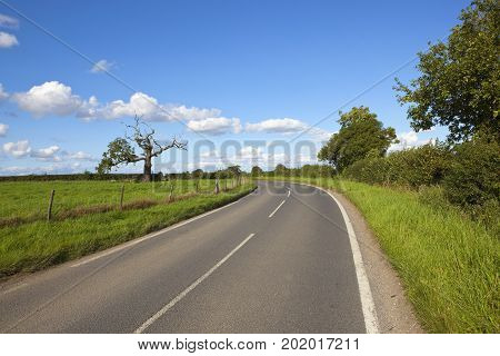 a curving country road with an old tree hedgerows and meadows under a blue cloudy summer sky in yorkshire