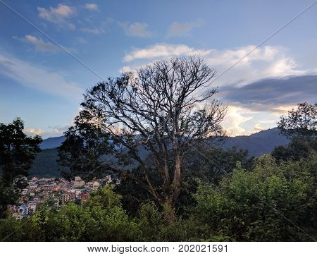 Huge tree and mountain background at sunset Lakeside Pokhara Nepal