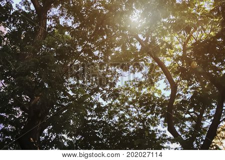 In the park Under the big tree with fresh air summer light and warm breeze.