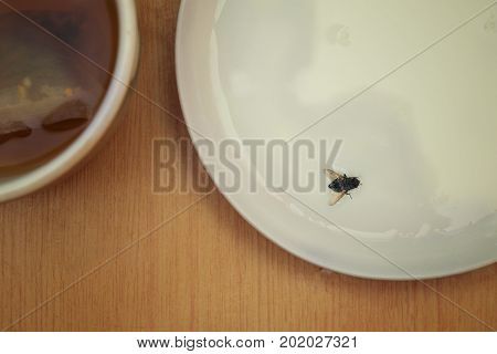 Fly landed in a saucer with milk overhead view cropped photo