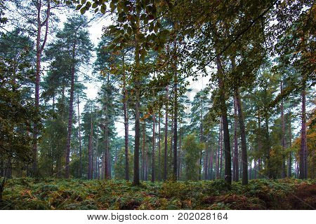 Trees. Woods, forest, pine trees, pine woods,