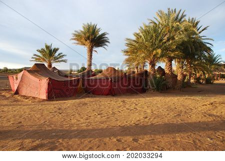 Morocco, bedouin tents near an oasis in the desert.