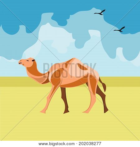 Camel in the desert. Color camel vector illustration