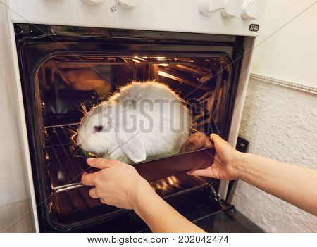 The Girl Takes It In The Oven A Rabbit.