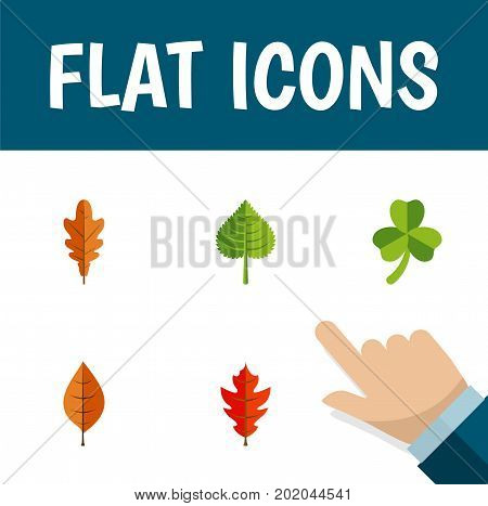 Flat Icon Maple Set Of Linden, Hickory, Frond And Other Vector Objects