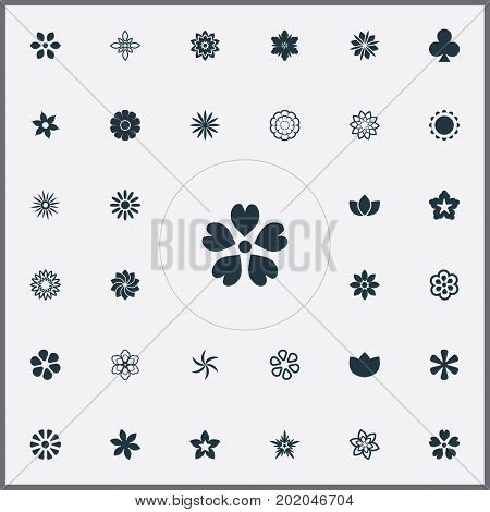 Elements Victoria, Crocus, Floret And Other Synonyms Lucky, Peony And Orchids.  Vector Illustration Set Of Simple  Icons.