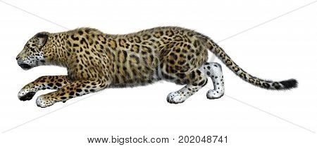 3D Rendering Big Cat Jaguar On White