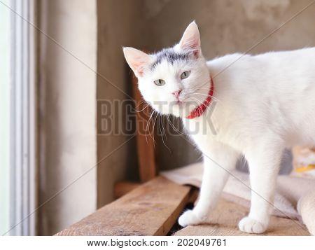 Cute white homeless cat in animal shelter