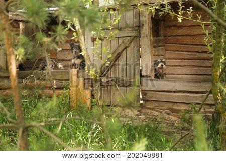 Homeless dogs in animal shelter