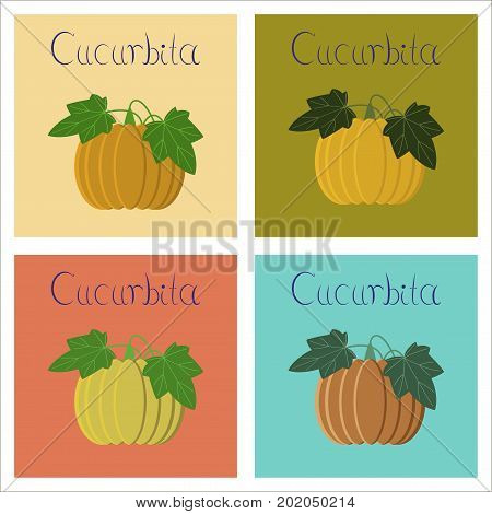 assembly of flat Illustrations nature plant Cucurbita