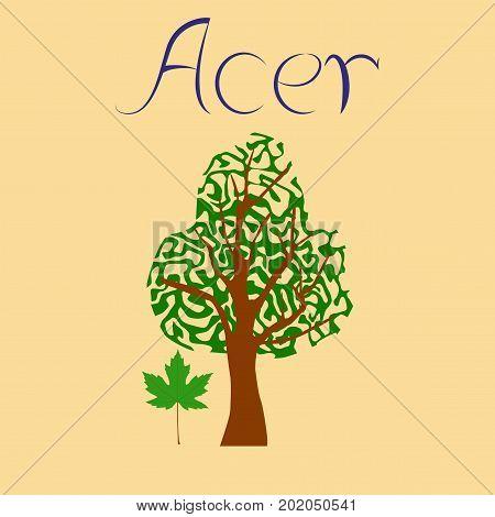 flat illustration on stylish background plant Acer