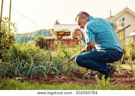 Family Hoeing Vegetables