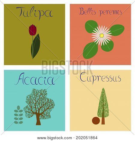 assembly of flat Illustrations nature Cupressus Acacia Bellis Tulipa