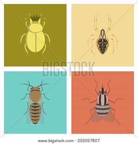 assembly of flat Illustrations egypt bug scarab Araneus bee fly