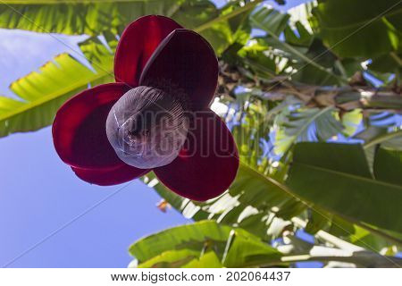 Exotic tropical plants and flowers for ornamental gardening