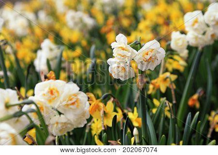 Beautiful gardens of flowers