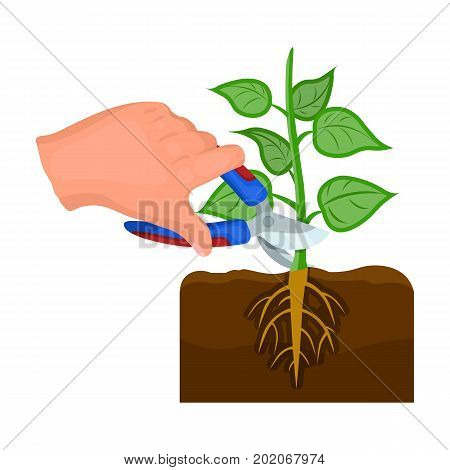 Plants, single icon in cartoon style .Plants, vector symbol stock illustration .