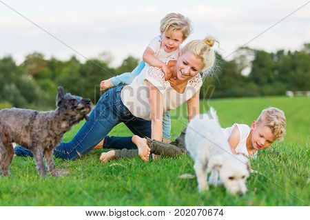 Woman Romps With Her Two Sons And Two Dogs On The Grass
