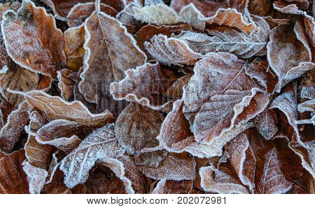 Pile of frozen leaves with subdued color